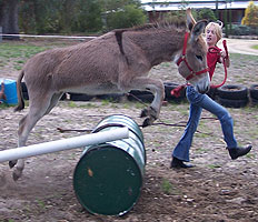 donkey_training